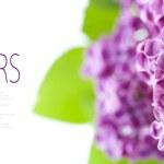 Spring Lilac — Stock Photo #5536577