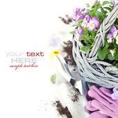 Garden tools — Stockfoto
