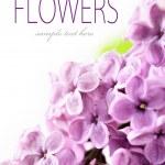 Spring Lilac — Stock Photo