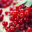 Stock Photo: Ripe red currant berries