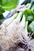 Green Onion — Stockfoto