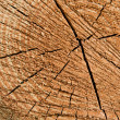 Wood tree rings — Stockfoto