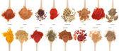 Coleção de especiarias em colheres — Foto Stock