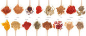 Spices collection on spoons — Stok fotoğraf