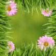 Green and pink daisy background or border — Stock Photo