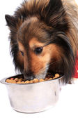 Dog eating food from a bowl — Stock Photo