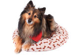 Dog laying in plush bed — Stock Photo
