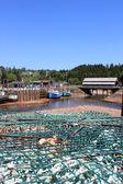 St. Martins, New Brunswick wharf — Stock Photo