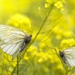Insects butterfly - Stock Photo