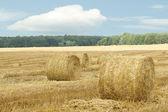 Madeja seca de heno de hierba — Foto de Stock