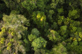 Rain Forest on the road to Kuranda — Stock Photo