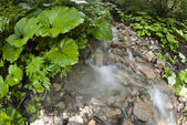 Flowing Water, Dolomites — Stock Photo