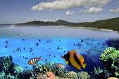 Colors of Whitehaven Beach, Australia — Stock Photo
