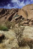 Цвета австралийской глубинке — Стоковое фото