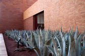 Aloe Vera Plants — Stock Photo