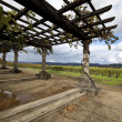 Stock Photo: Grapevine Pergola