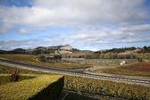 Vineyard Landscape — Photo