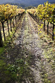 Vineyard Path — Stock Photo