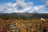 Napa valley — Zdjęcie stockowe