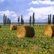 Straw rolls in the field — Stock Photo