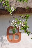 Branch & window — Stock Photo