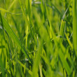 Stock Photo: Grass nature background