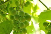 Grapes nature background — Stock Photo
