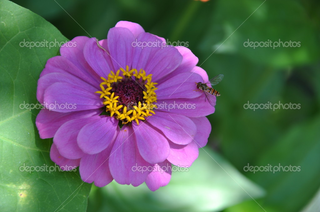 Nature Flower Background Pictures Flowers Nature Background