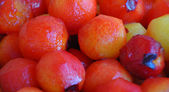 Plum fruits — Stock Photo