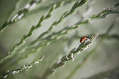 Red ladybird on green leaf — Stock Photo