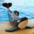 The orcas show in Loro Parque, Tenerife island, Spain — Stock Photo