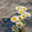 Bouquet of daisies - Stock Photo