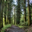 Cedars in walking road - Stock Photo