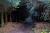 Skye island forest — Stock Photo
