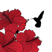 Floral background with hibiscus and hummingbird — Stock Vector