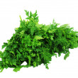 Stock Photo: Parsley and dill