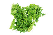 Chopped parsley Isolated on the white background — Stock Photo