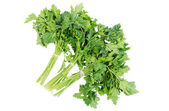 Bunch of parsley Isolated on the white background — Stock Photo