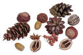 Composizione di coni secche e frutta — Foto Stock