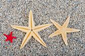 Starfish of sand — Stock Photo