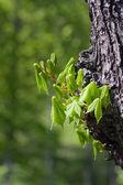Tempo verde — Fotografia Stock