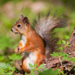 Stock Photo: The squirrel in the spring