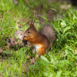 Squirrel in spring grass — Stock Photo #5666790