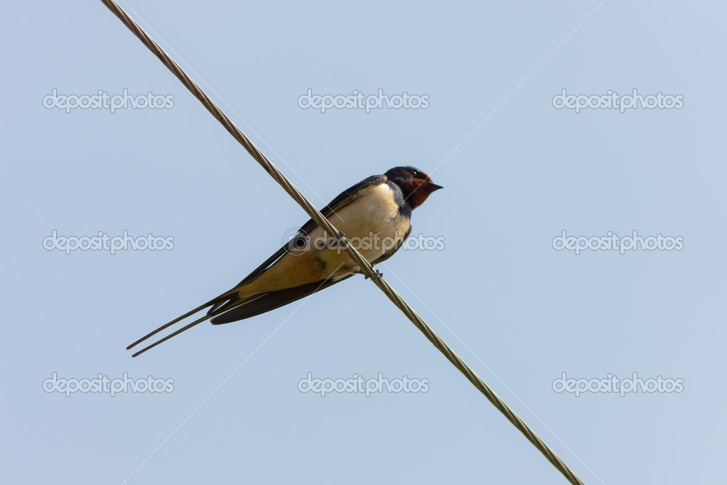 The lonely swallow sits on a wire — Stock Photo #5662381