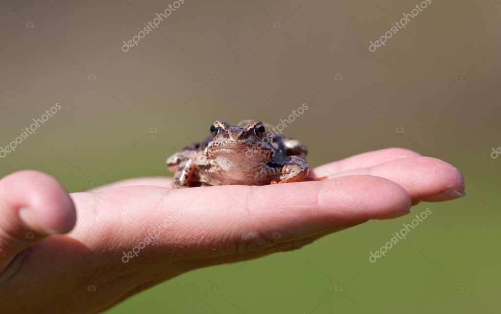 The frog sits on a palm of the person — Stock Photo #5662417