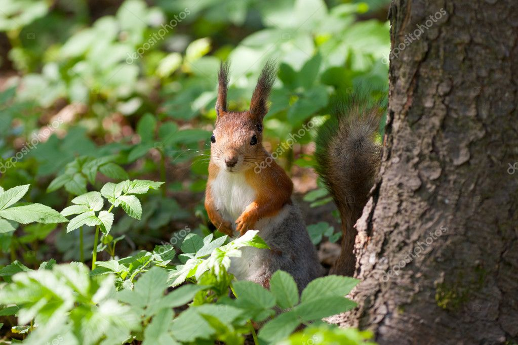 The squirrel in a spring grass at a tree — Stock Photo #5666786