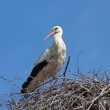 Stork in a nest — Stock Photo #5676578