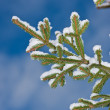 Fir-tree branches — Stock Photo #6269063