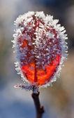 První frost — Stock fotografie