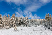 Coniferous wood after the first snowfall — Stock Photo